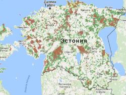 В Эстонии в канун 2017 года вновь можно самостоятельно приобрести ёлку прямо в лесу