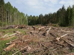 Эстонские экологи отмечают существенный рост вырубки государственных лесов страны