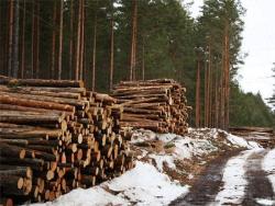 Плюс 19%: Экспорт древесины из Эстонии в начале 2017 года достиг рекордного уровня