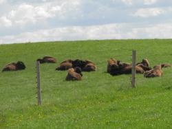 Поиски `семи чудес Эстонии` продолжаются: Пюхтицкий монастырь выбыл, а бизоны ворвались