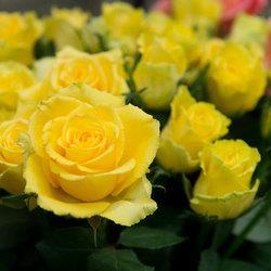 В парке Кадриорг продолжается выставка `100 роз Эстонии`