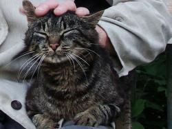 Занимательный эстонский: Ласковое слово и кошке приятно!