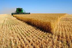 Фермеры из Южной Эстонии готовятся к повторению рекордного урожая 2015 года