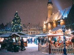 Ждите к 19 ноября: Второй год подряд Ёлка для Ратушной площади найдена в черте Таллина