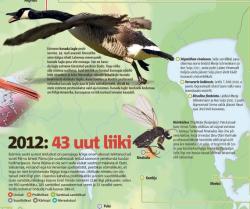 Eesti Päevaleht: За 2012 год в Эстонии найдено 43 новых вида живых существ