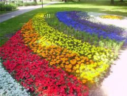 С 24 мая по 24 августа в Таллине пройдёт V международный цветочный фестиваль